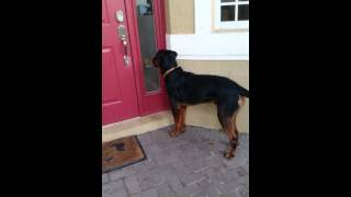 Rottie Nation Maxx