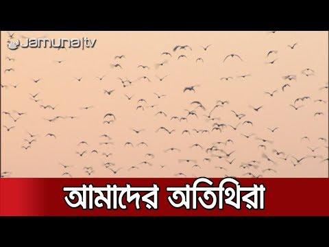 জাহাঙ্গীরনগরের ঘুম ভাঙে অতিথি পাখির কিচিরমিচির শব্দে   Jamuna TV