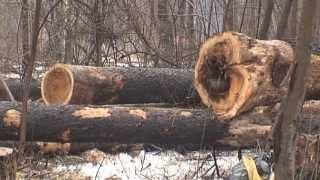 Вырубка деревьев в парке Кирова, Ижевск(, 2013-04-09T13:40:04.000Z)