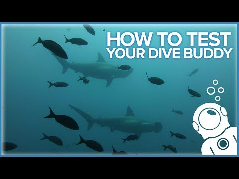 How To Test Your Dive Buddy