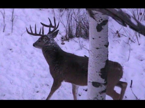 Discovering - Deer Camp, 17 pt Buck from YouTube · Duration:  22 minutes 33 seconds