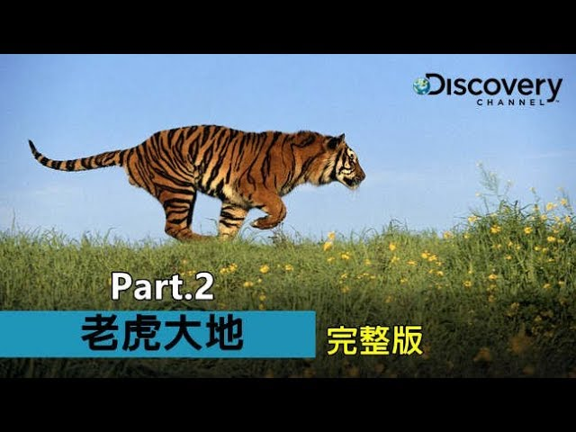 Discovery  叢林中逐漸消失的身影--《老虎大地》(Part 2)