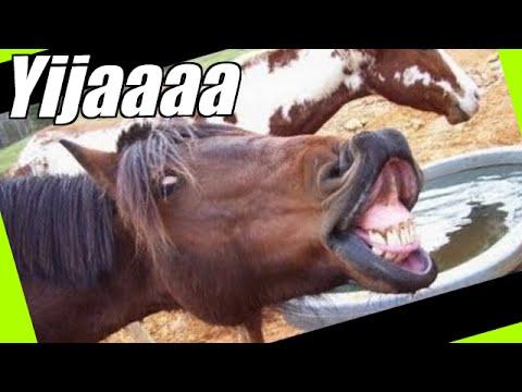 Animales Gritando Y Haciendo Sonidos Chistosos Parte 2 -  Animales Divertidos