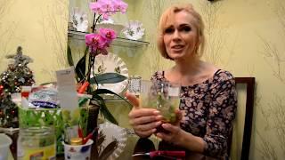 Реанимация маленькой орхидеи. Какой способ я выбрала.