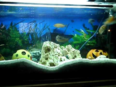 barsch aquarium youtube. Black Bedroom Furniture Sets. Home Design Ideas