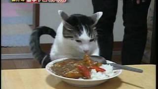 Download Video curry neko MP3 3GP MP4