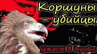 Коршун крадет кур // Как защитить кур от хищных птиц // Наш опыт // Ужасы в деревне