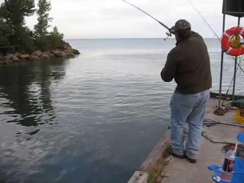 Steelhead fishing erie pennsylvania walnut creek pier 9 11 for Erie pa steelhead fishing report