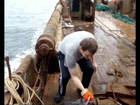 Работа в море 2009