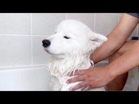 목욕하다 마사지 즐기는 강아지