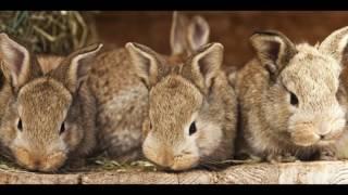 Кролики. Самые красивые породистые кролики!!!