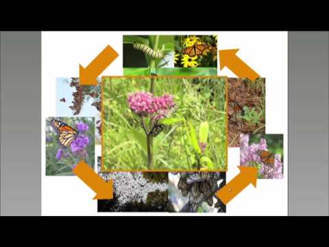 Monarch Conservation Science Partnership