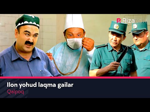 Qalpoq - Ilon yohud laqma gailar | Калпок - Илон ёхуд лакма гаилар (hajviy ko'rsatuv)