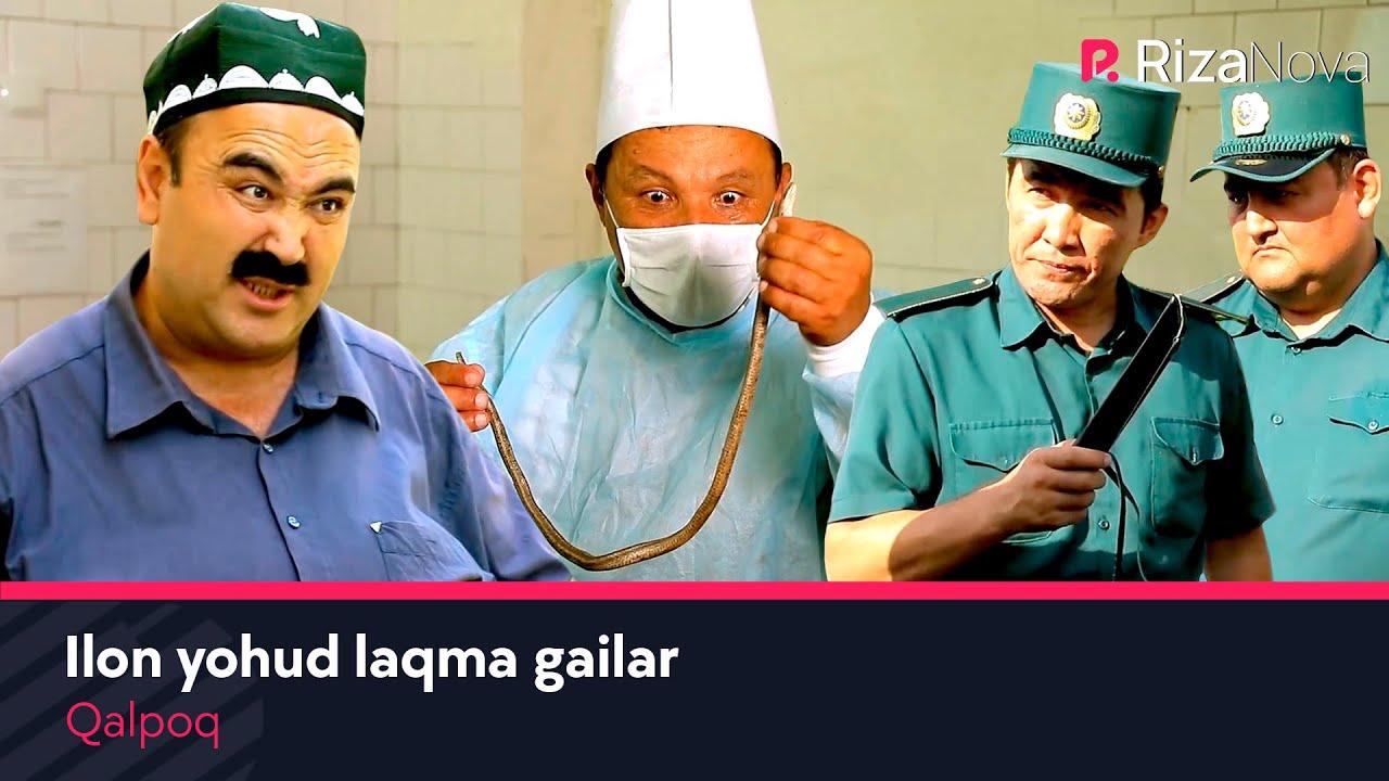 Qalpoq - Ilon yohud laqma gailar / HD