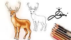 Hirsch Zeichnen Rentier Elch Malen Reh Zeichnung Youtube