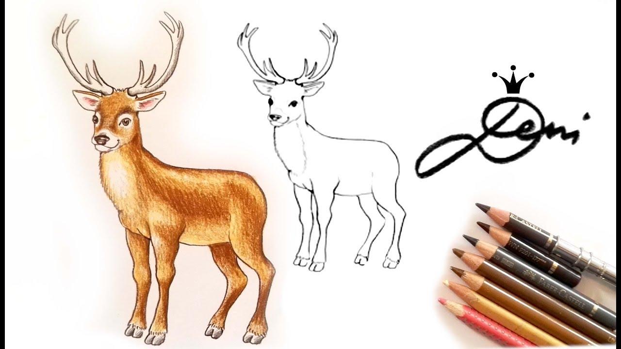 Reh zeichnen