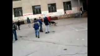 Pas juri učenika u dvorištu osnovne škole :D