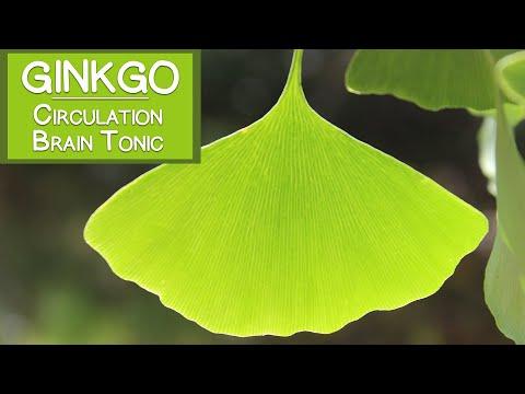 Propriétés Ginkgo Biloba - Conférence : comment stimuler l'attention et la concentration ...