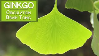 Ginkgo Biloba Leaf, Circulatory Stimulant and Brain Tonic
