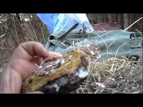 Magnifier on Hudson's Bay Tin and Chaga