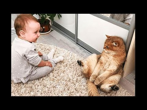 A cute baby and a cat 😽😽😽 A baby and a cat play extremely funny