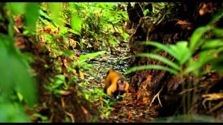 Amazonia, la bande-annonce