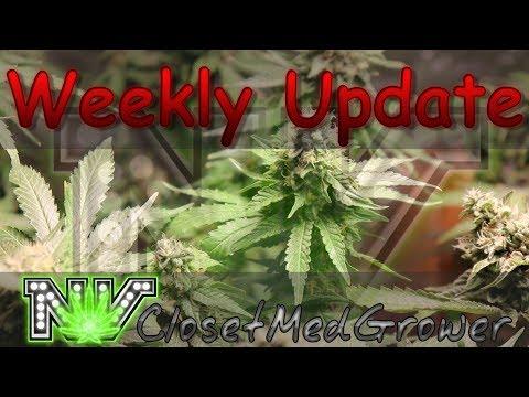 Weekly Update 6/28/2017