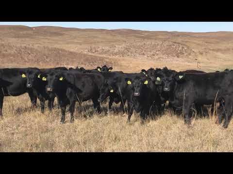 Ranch for Sale in Nebraska -- The AL Ranch Company, Halsey Nebraska