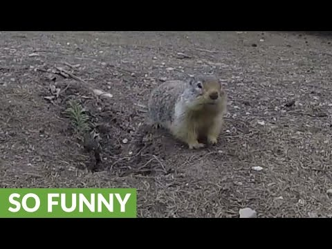 Gopher goes nose to nose with woman for carrot