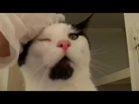 Meet Eddie At York Cats Protection Adoption Centre! 2/4