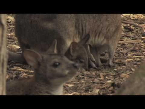 Marsupial Documentary