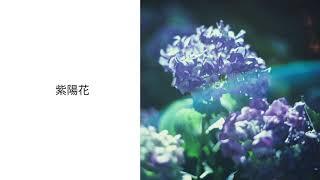 postman - 紫陽花
