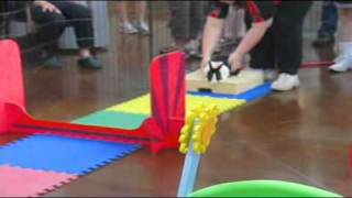 Rabbit Agility Demo At The Edmonton Humane Society
