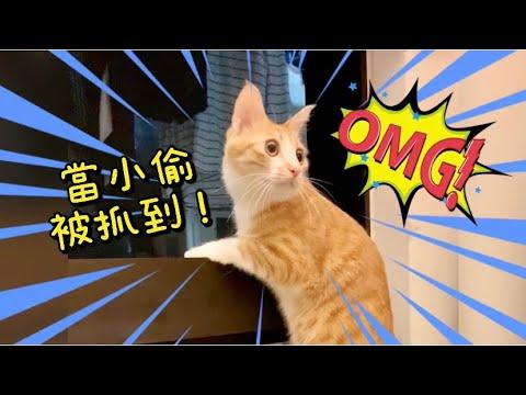 【傲嬌爸的養貓日常】小偷貓犯案現場被抓包!瞳孔震驚! - YouTube