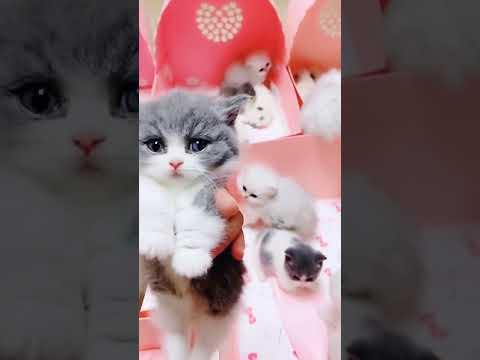 sevimli kedi videoları