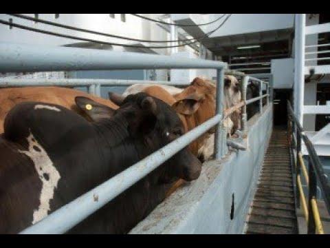 Verso Sera: con OIPA per gli orsi in Trentino, i bovini trasportati sulle navi e i daini del Circeo