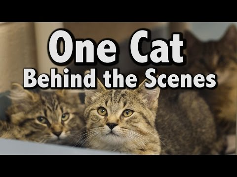 One Cat (Behind the Scenes) - Drake - One...