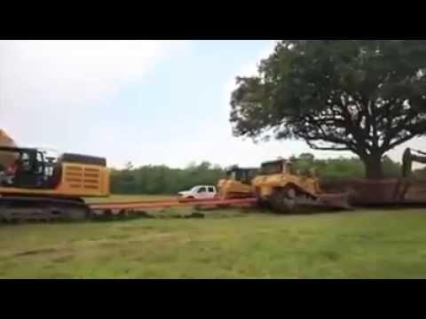 Baum Umpflanzen mal eben einen baum umpflanzen