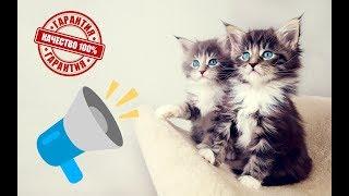 👍МЯУКАНЬЕ КОШЕК И КОТЯТ Приятные звуки для кошек