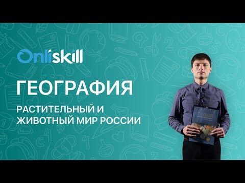 География 8 класс: Растительный и животный мир России