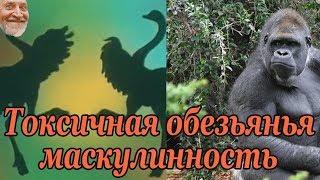 В мире животных: Токсичная обезьянья маскулинность (перевод Computing Forever)