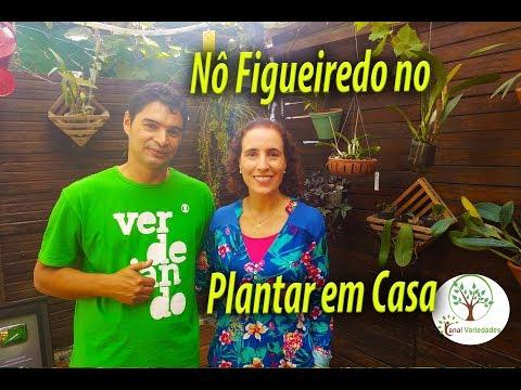NÔ FIGUEIREDO VISITA O PLANTAR EM CASA, SÓ ALEGRIA LIVE