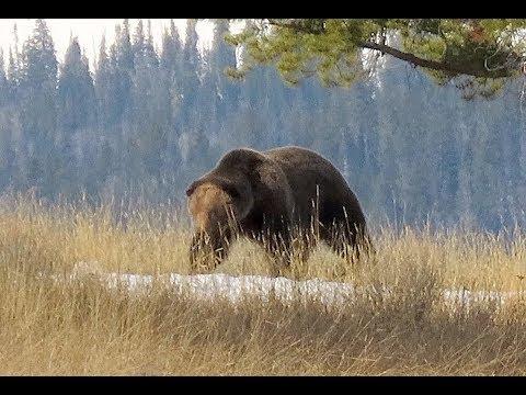 Yellowstone Spring Hiking April 2 - May 22