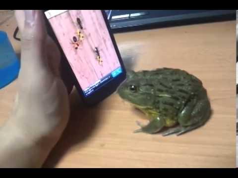 Лягушка и iPhone)))С лягушкой шутки плохи Crazy Frog)))