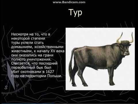 Черная книга ленинградской области животные и растения с картинками