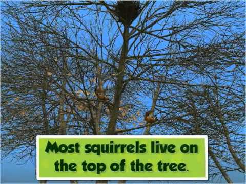 Animals Living on Trees - Class 3