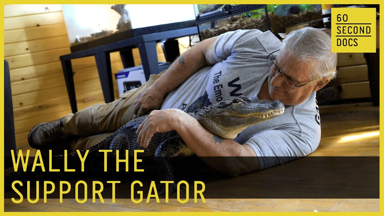 Wally the Emotional Support Gator