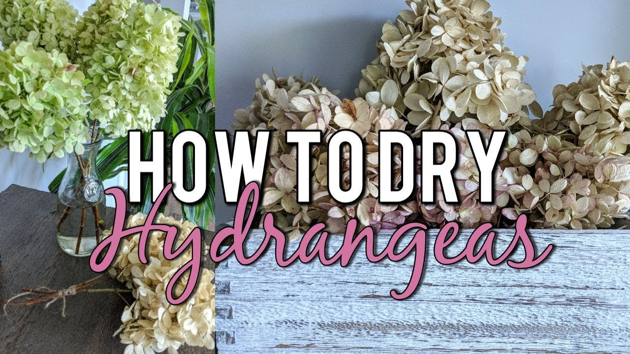 How To Dry Hydrangeas In Water Naturally Beautiful Dried Flower