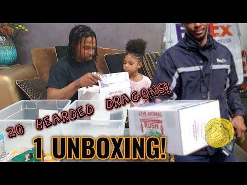 Unboxing 20 Baby Bearded Dragons! Hypos, Translucents, Leatherbacks, Het Zeros & Het Witblits