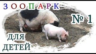 █ ЗООПАРК для ДЕТЕЙ / ПОРОСЯТА Piglet Вислобрюхие / Контактный зоопарк.